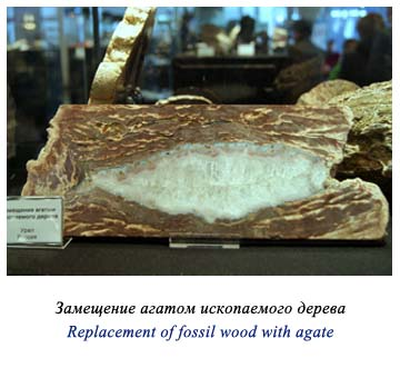 Replacement of fossil wood with agate